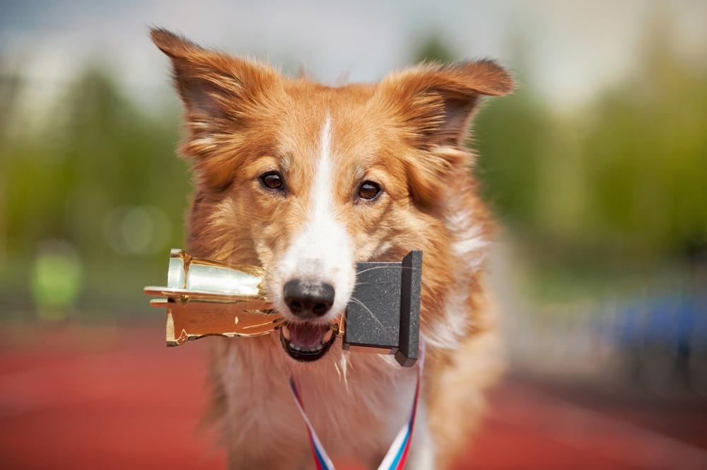 PETA Storms Dog Show — Animal Activist Watch