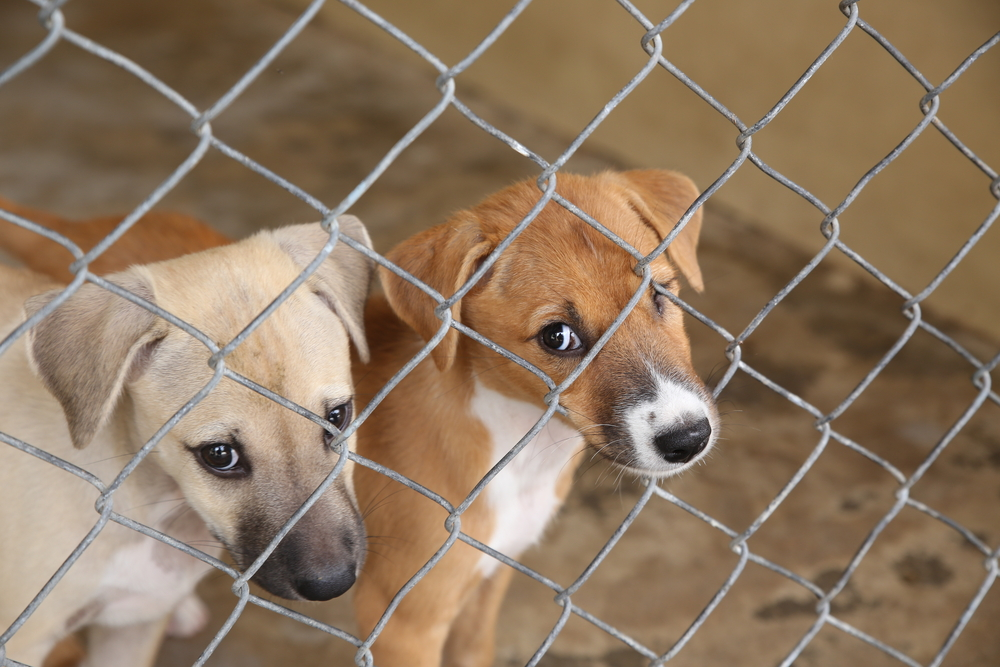 Shock Report Exposes Dark Side of Animal Shelters — Animal